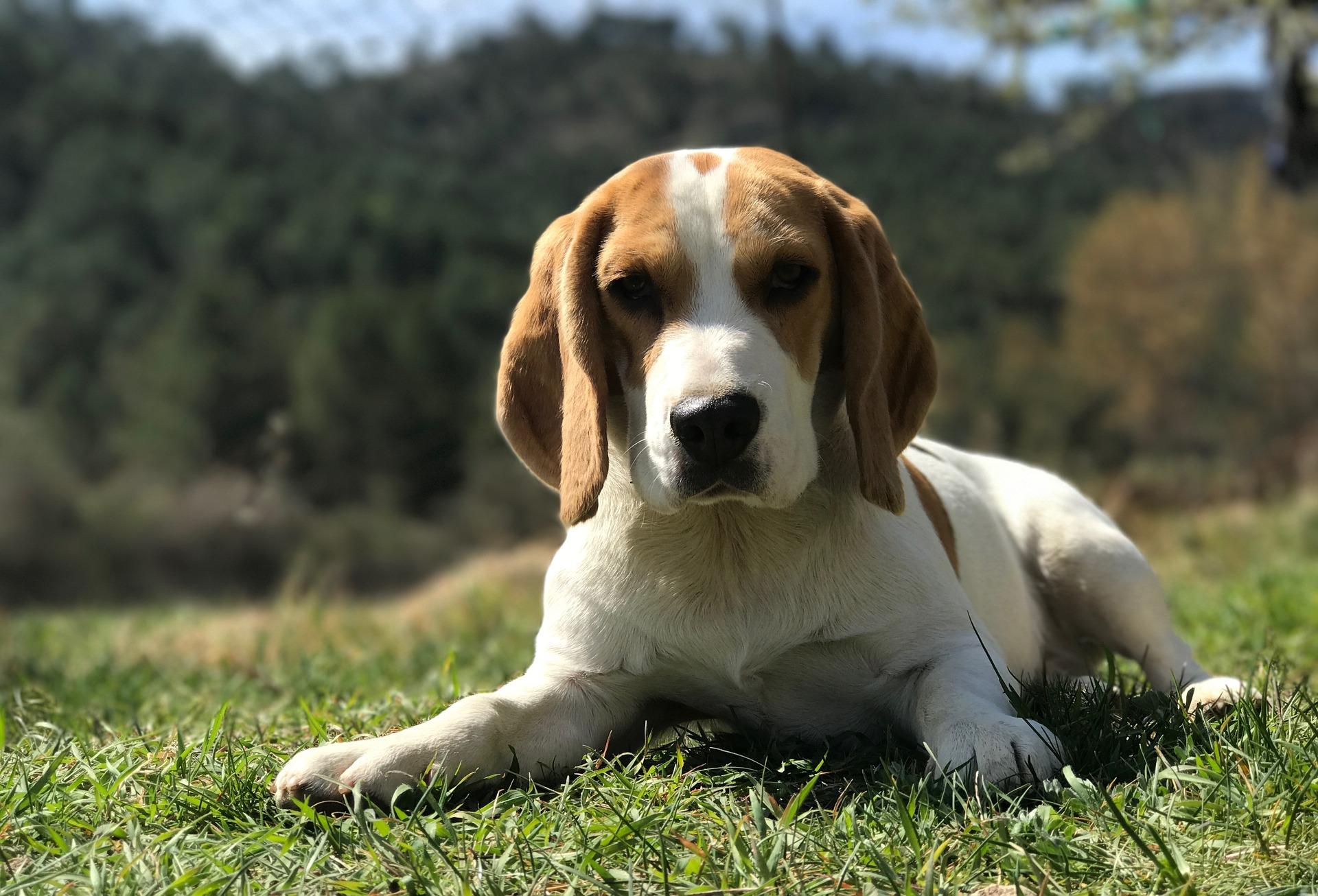 Factcheck: 'Veel baasjes zien liever hun partner overlijden dan hun hond'