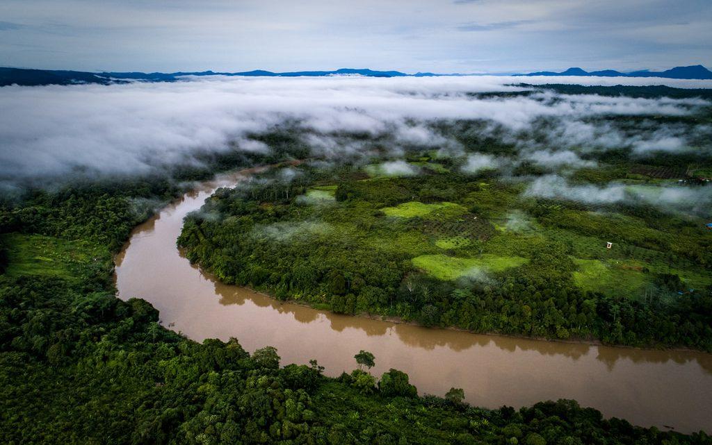Palmolieboeren verwoesten veel regenwoud, maar het alternatief is nog heftiger