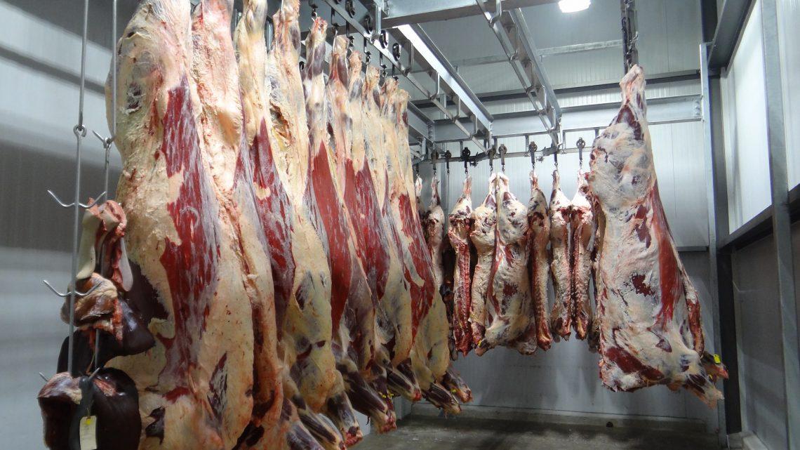 'Iedere dag worden er 1,7 tot 1,8 miljoen dieren gedood in ons land'