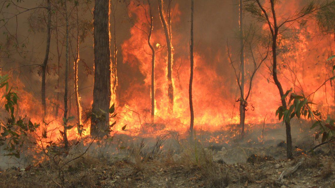 Bosbranden in Australië: dit is wat er niet klopte op jouw tijdlijn