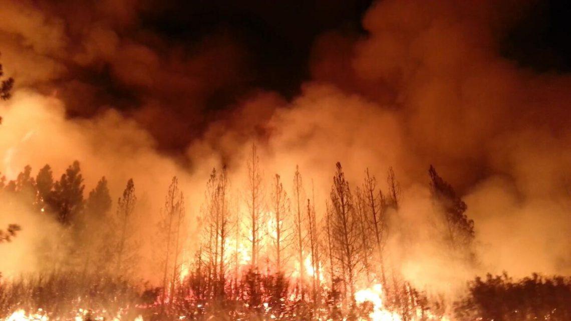 Bosbranden in Australië: zijn er echt een miljard dieren dood?