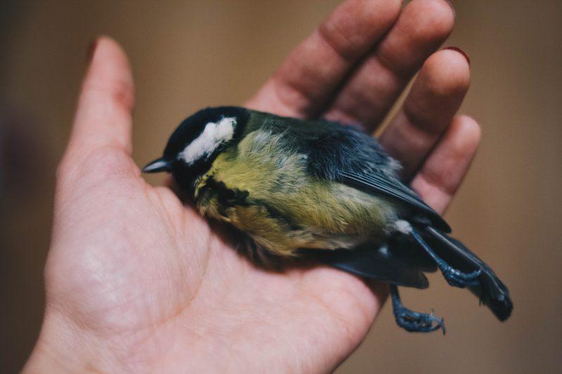 'Vogels sterven door 5G-zendmasten'