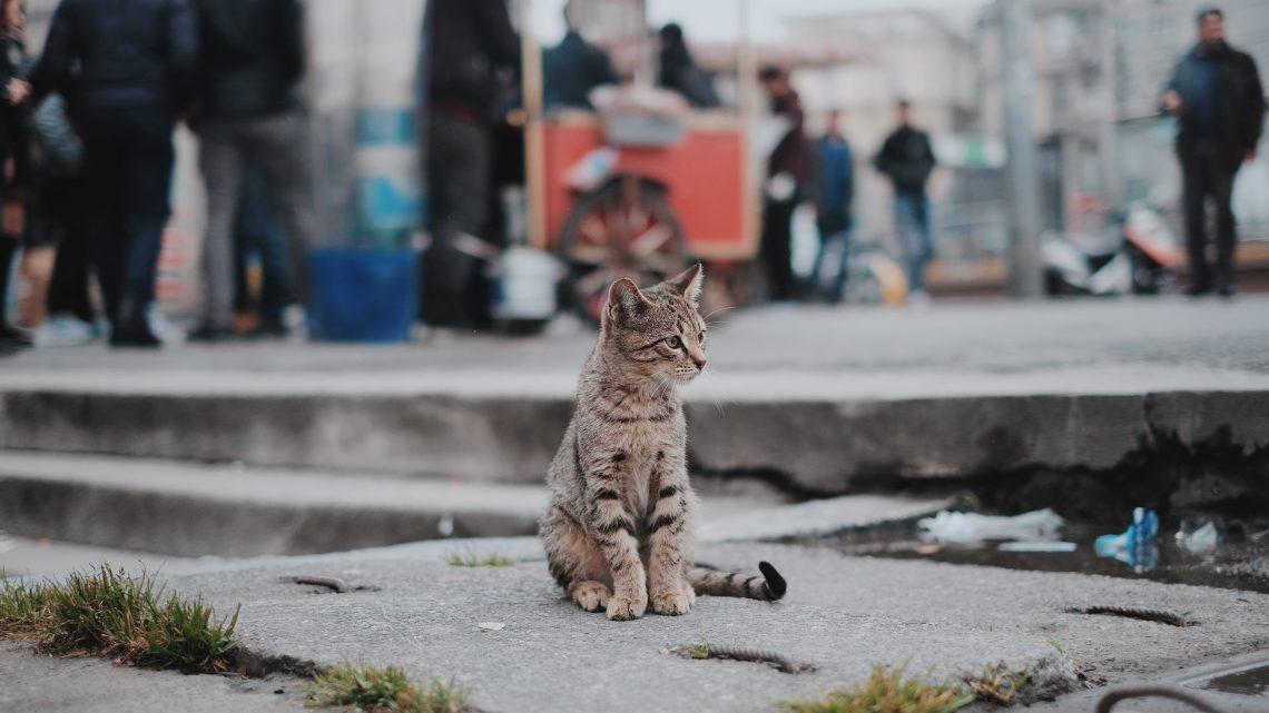 Kattenavondklok niet nuttig voor bescherming vogelpopulatie